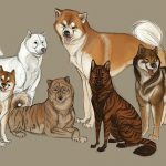 Les six races de chiens originaires du Japon