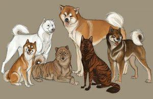 race chien japonais