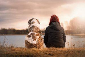 magnifique photo chien et son maitre